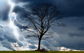 trees, nature, landscape, wind, rain, elements