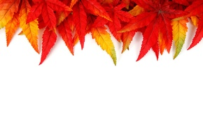 red, yellow, texture, leaves, orange, fall