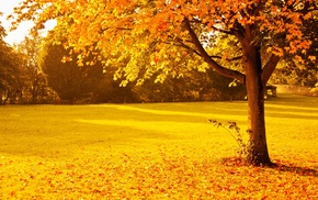 gold, seasons, park, nature, orange, sunset