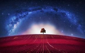 trees, universe, digital art, stars