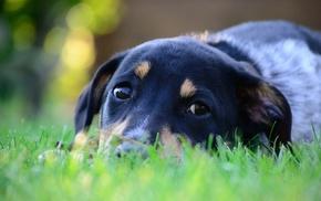 nature, bokeh, dog, grass, animals, depth of field