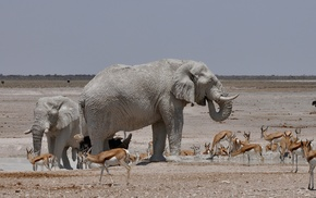 clear sky, Africa, steppe, elephant, nature, water