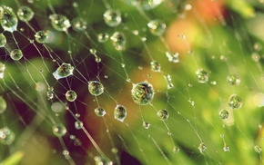 depth of field, water drops, spider