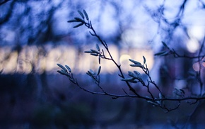 depth of field, branch, trees