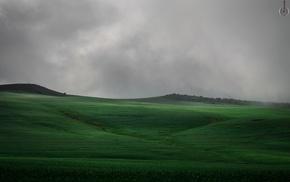 green, sky, mist, niebla, nature, campo