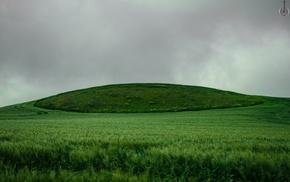 sky, green, nature, campo, niebla