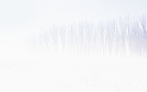 white, white background, winter, trees, snow