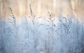 winter, snow, grass, depth of field