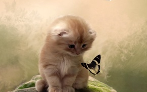 butterfly, insect, cat, animals, feline