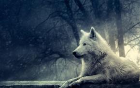 trees, wolf, animals, plants
