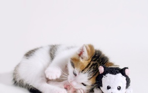 kittens, animals, stuffed animal, toys, sleeping, baby animals