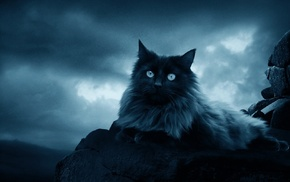 sky, cat, rocks, clouds, feline, animals