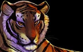 big cats, animals, closeup, tiger, face, feline