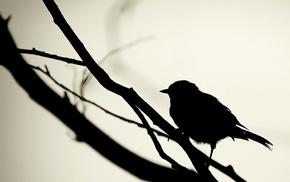 birds, silhouette, twigs, monochrome