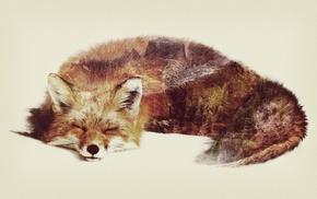 fox, double exposure, animals