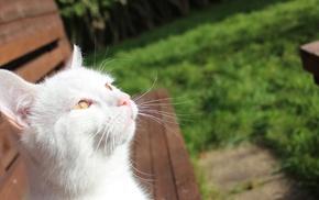 cat, animals, nature