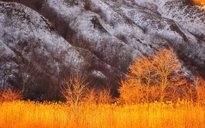 snow, mountains, nature, landscape, trees, plants