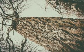 trees, landscape, vintage, sky