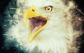 eyes, animals, eagle, birds