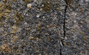 moss, concrete, split, texture
