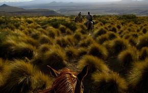field, hills, horse, grass