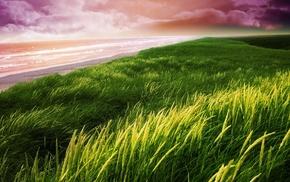 sea, coast, sunset, grass