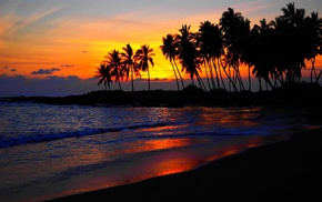 beach, sunset, palm trees