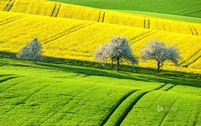 yellow, trees, plants, green, landscape, field