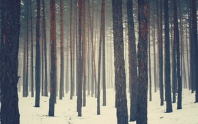 trees, forest, nature, snow
