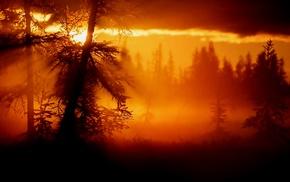 trees, nature, mist, sunset, clouds, landscape