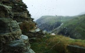 water drops, nature, spiderwebs, closeup