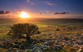 sunset, dusk, nature, stones, landscape, trees