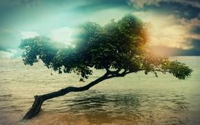 beach, sea, trees