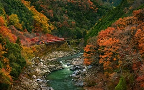 canyon, fall, forest, Japan, train, colorful