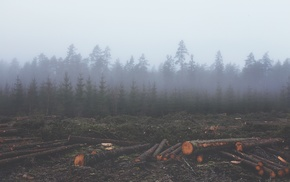 nature, wood, forest, mist