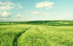 field, grass, landscape, road