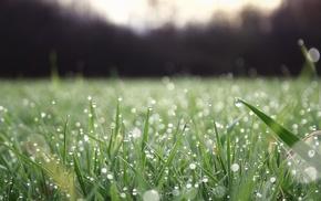 grass, water drops, dew