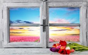 petals, window, nature, landscape, sunlight, wooden surface
