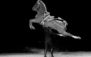 horse, France