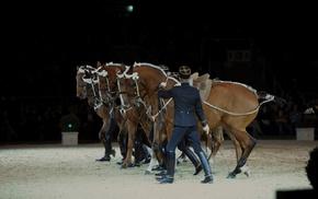 Equitation, Saumur, France, horse