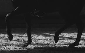 horse, horse riding
