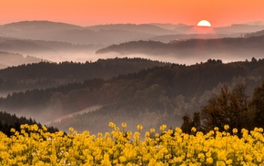 yellow, wildflowers, sky, landscape, flowers, mountains