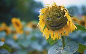 plants, nature, sunflowers, seeds, leaves, smiley