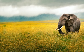 elephant, flowers, yellow, photography, clouds
