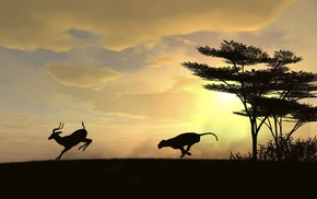 leopard animal, clouds, deer, trees, sunset, gazelle