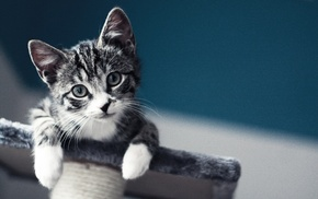 cat, baby, kittens, pet, macro, blurred