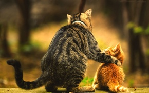 kittens, animals, love, baby, blurred, cat