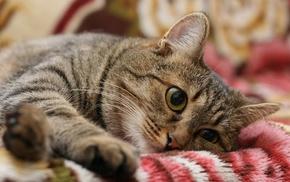 cat, yellow eyes, animals