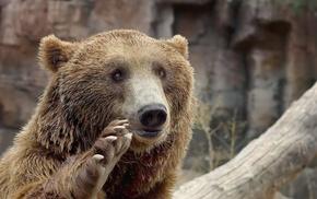 bears, nature, animals